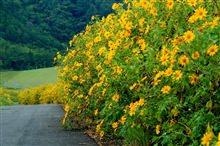 Những cung đèo dẫn đến xứ sở ngàn hoa